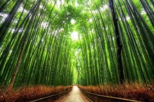 Kepada hutanku