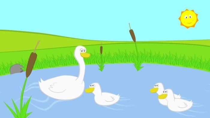 3 ducks2