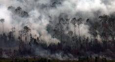 Riau - Asap pekat mengepul di hutan kawasan Cagar Biosfer Giam Siak Kecil-Bukit Batu, Provinsi Riau, Kamis (6/3). Menhut Zulkifli Hasan mengungkap adanya indikasi pengerahan 2.000 warga dari Sumatera Utara untuk merambah kawasan konservasi itu yang akhirnya menimbulkan kebakaran besar.  ANTARA FOTO/FB Anggoro/Asf/mes/14.