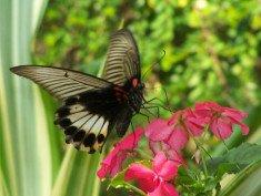 kupu dan bunga