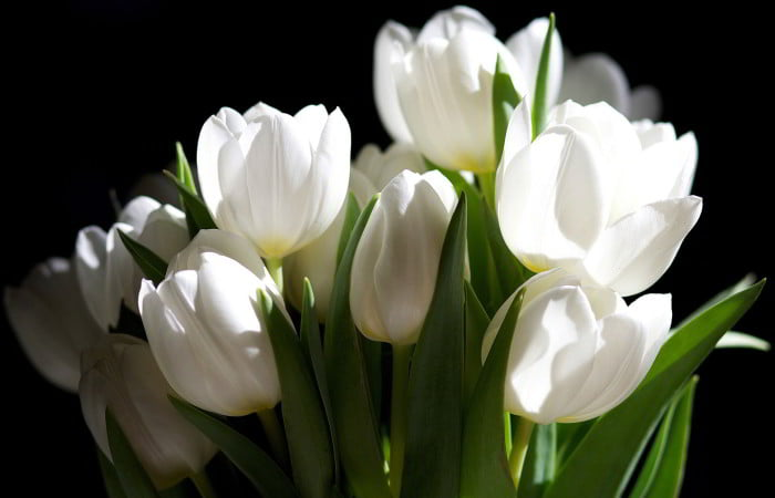white-flowers-images-and-wallpapers-6