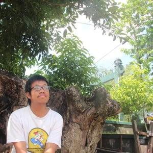 Pohon Kerinduan