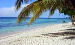 Melambai Di tepian Pantai